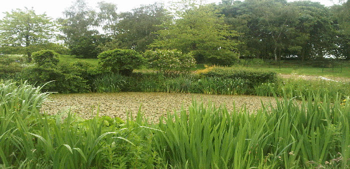 an overgrown pond needing plant control